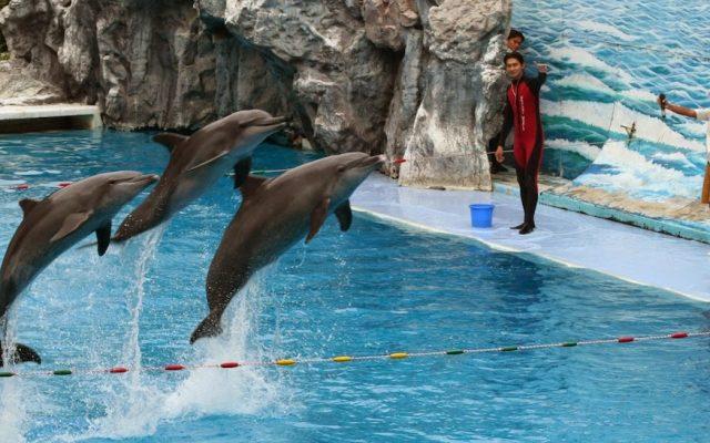 Dolphin show, Safari World, Bangkok