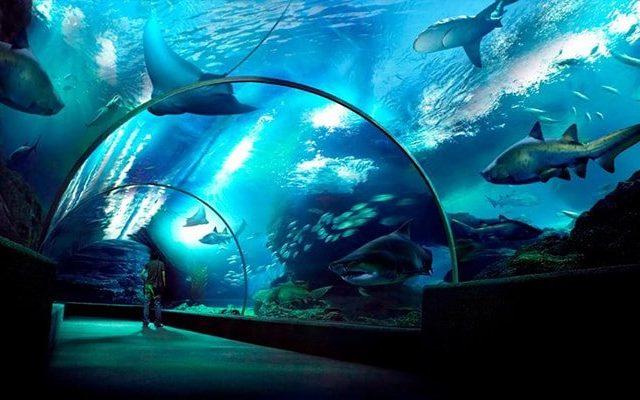 Sea Life – Ocean World Bangkok